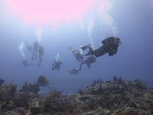 U of A scuba club underwater in Cozumel