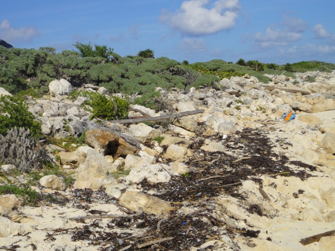 beach cleanup, cozumel, mexico